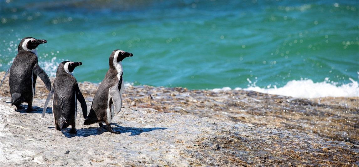 fish penguin