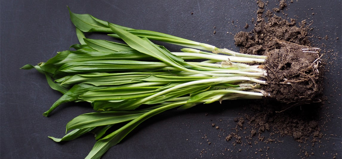 what are green onions