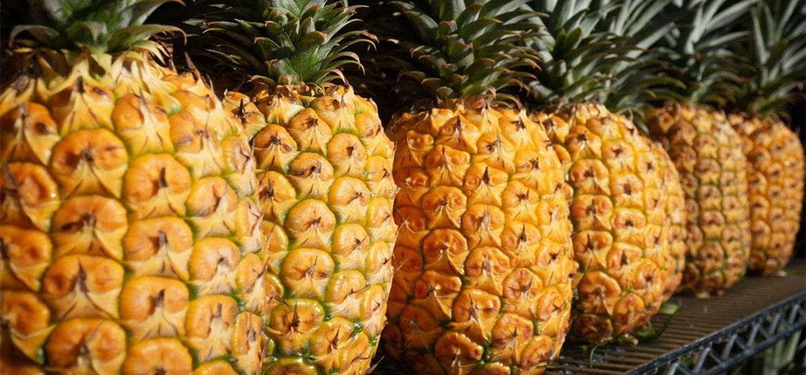 History of Pineapple