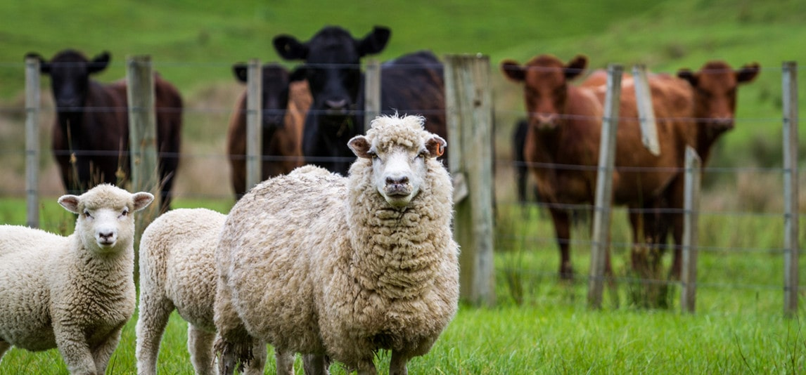 protecting your livestock